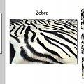 #ImitacjaSkór #lapart #tkanina #tygrys #zebra